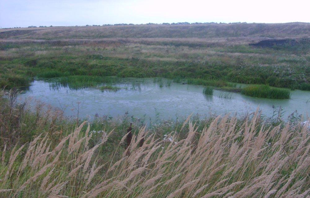 весной толстолобик возле берега ловля на подсак