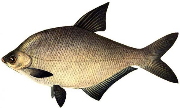 прикорм рыбы при ловле с берега