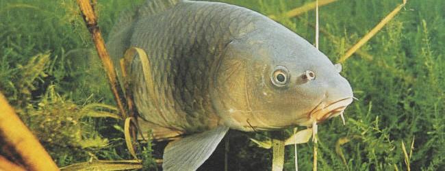 Рыболовный клуб - все о рыбалке, особенности рыбалки, где ловить, как ловить и на что