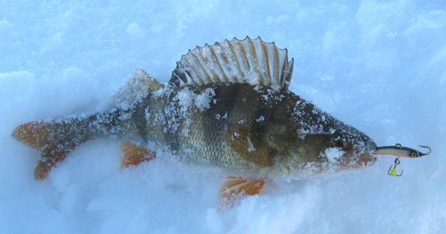 рыбалка большое летнее