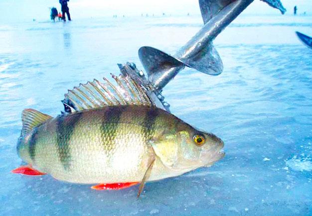 Вечерняя ловля плотвы со льда